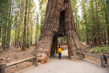 Private Giant Sequoia Grove Hike