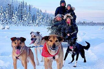 Private Dog Sledding Adventure in Alaska