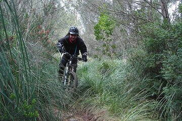 MTB guided tour in Bellver forest and Na Burguesa mountain departure from Palma