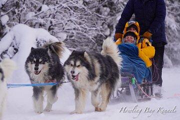 Dog Sled Adventure