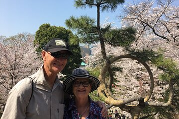 Cherry Blossom Tour Tokyo with a Local Guide: Custom & Private ★★★★★