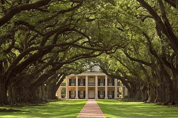 Swamp Boat Ride and Oak Alley Plantation Tour from New Orleans