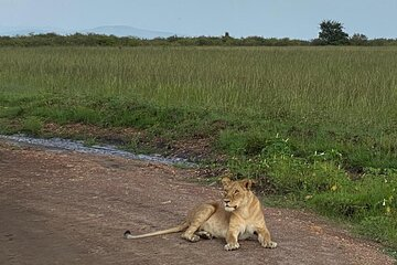 Nairobi national park, David Sheldrick elephant Trust and Giraffe center