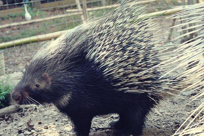 North Georgia Zoo Wildlife Combo