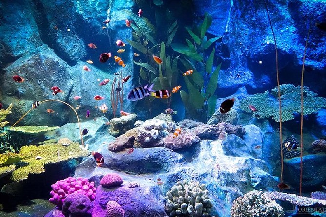 Skip the Line: Pattaya Underwater World Tickets with Optional Hotel Transfers