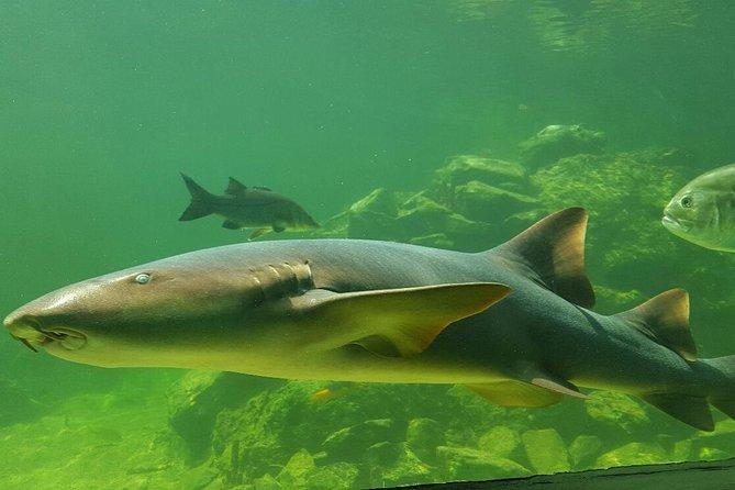 サンタマルタ海洋世界水族館の入場券とガイド
