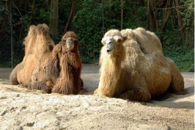 Ingresso para o Zoo Safari