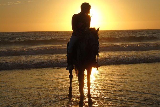Agadir Paardrijden Paradise Valley en Taghazout Beach
