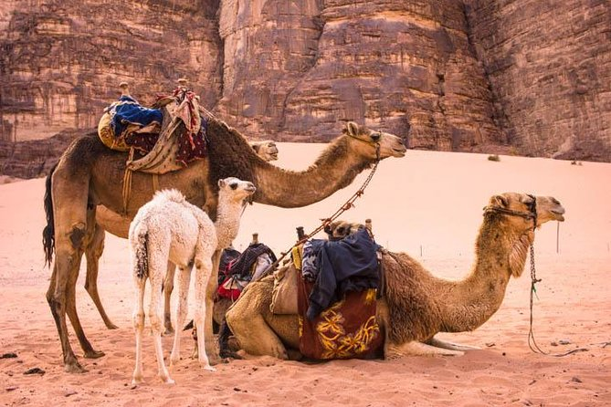 Your guide can, of course, arrange a camel ride on request