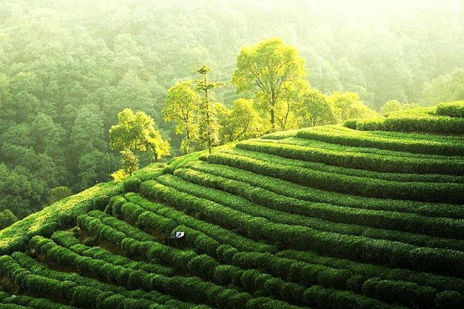 Private Tour Hangzhou West Lake and Tea Fields Discovery photo 2