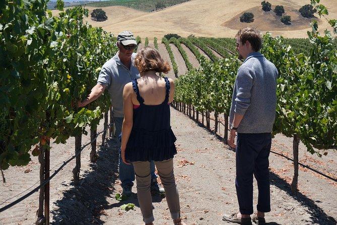 Privat Vinprodusent Vin Tour av Santa Barbara