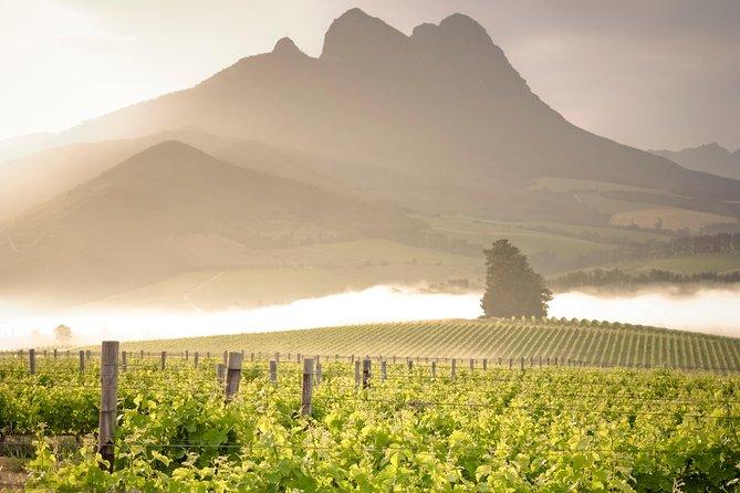 Vine Hopper: Hop-On Hop-Off Wine Tour - Northern Route