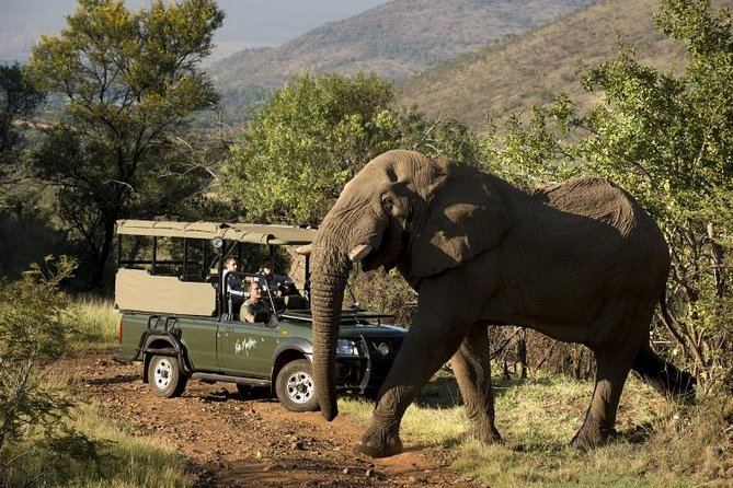 Pilanesberg National Park Safari from Johannesburg