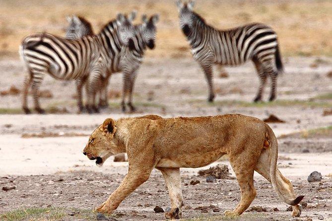 6 DaysTsavo - Amboseli - Lake Nakuru - Lake Naivasha - Masai Mara -Kenya Safari