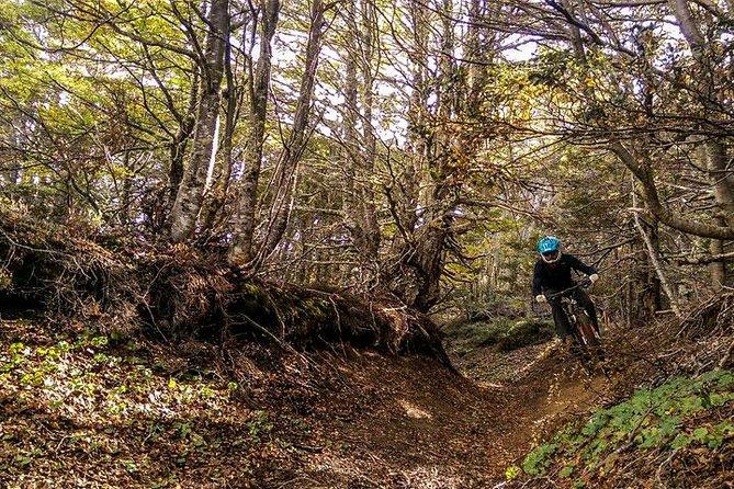 Patagonia Small Group Mountain Bike Tour from Punta Arenas