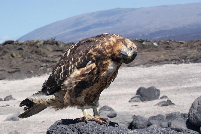 5 Day Galápagos Trip in Santa Cruz Island Land-based