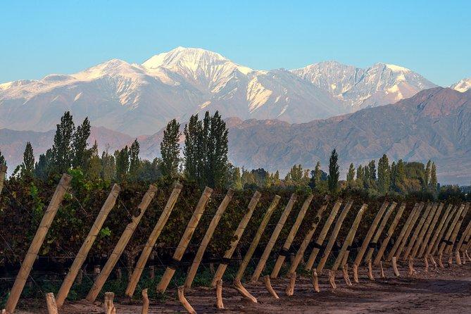 Excursão vinícola particular do Vale de Uco saindo de Mendoza