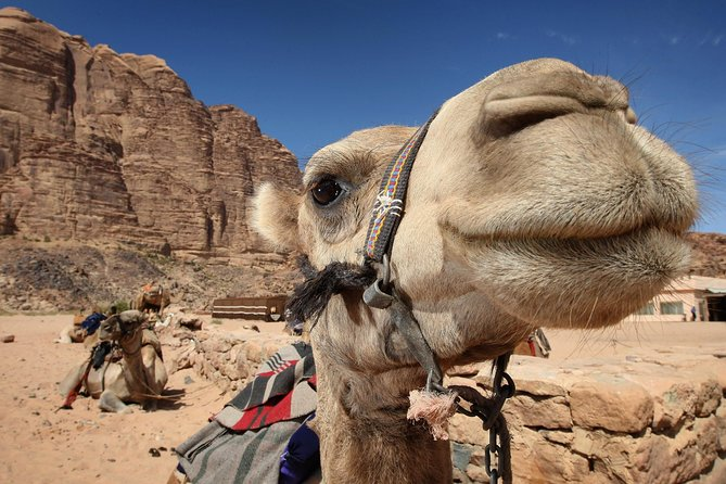 Sightseeing Tour to Petra from Amman