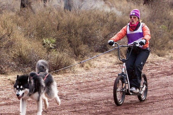 Dog Powered Scooter Jor-ing in Pagosa Springs photo 1