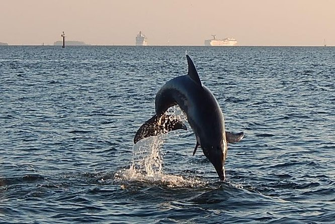 1.5-hour Dolphin Sightseeing Cruise from Tampa
