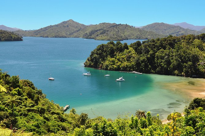 Full Day Queen Charlotte Kayak and Walking Tour from Picton