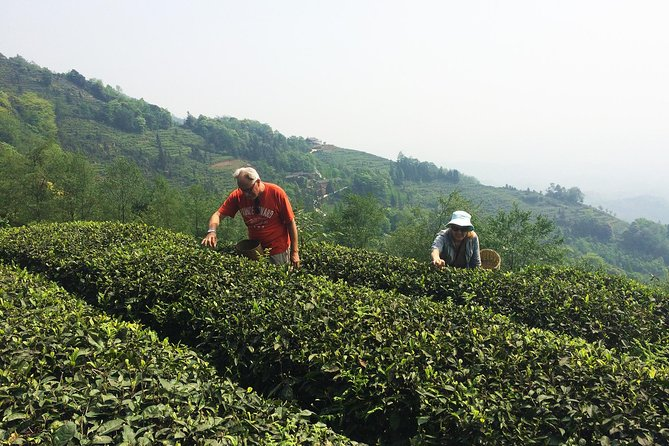 Private Mengdingshan Tea picking Experience Day Tour with local lunch