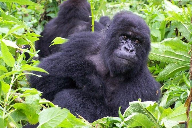 18-Day Mountain Gorilla To The Mara Adventure Camping Tour from Nairobi photo 1