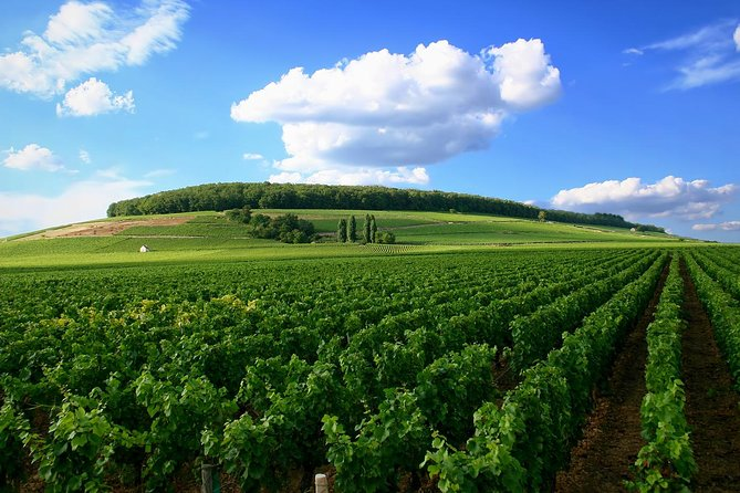 Full-Day Private Guided Tour of Champagne wih Hotel Pickup