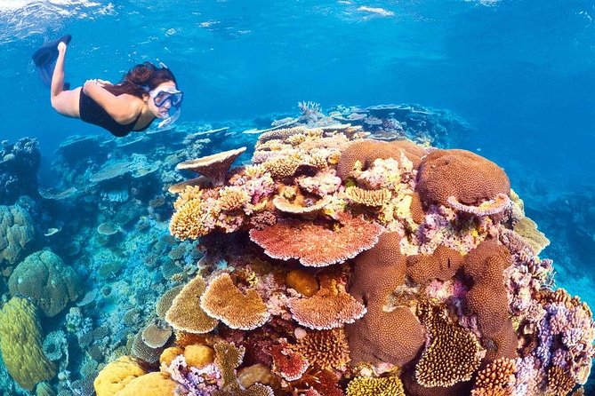 6-Day Best of Cairns Including the Great Barrier Reef, Kuranda and the Daintree Rainforest