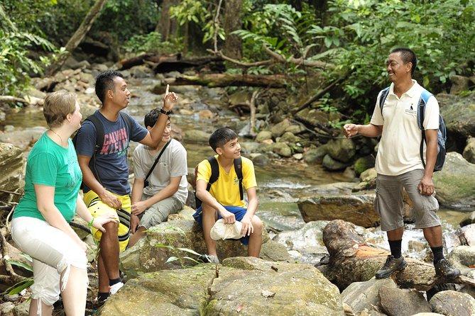 Morning Rainforest Walking from Langkawi