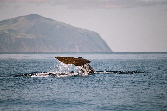 Whale and Dolphin Watching Tour at Terceira Island