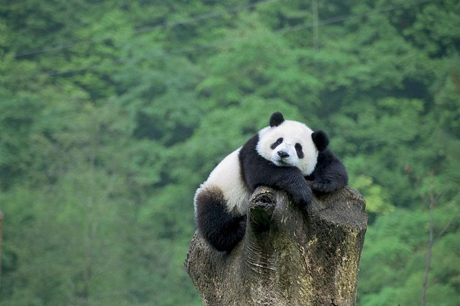 Beijing Panda House and Mutianyu Great Wall: Private Day Tour