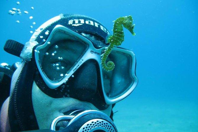 Try Scuba Diving in Split