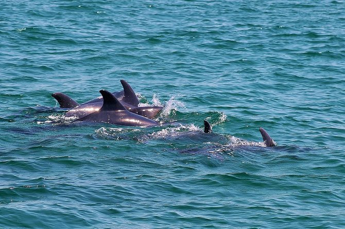 Dolphin Watching Tour by Catamaran from Lisbon