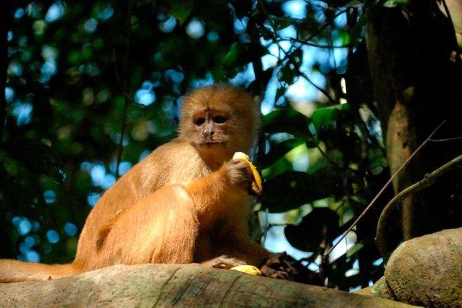 Amazônia Boliviana de 4 Dias Aventura nos Pampas de La Paz