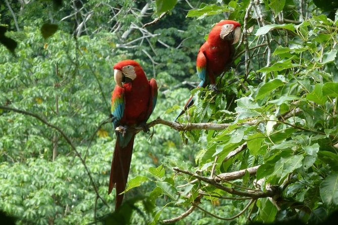 Madidi de 5 dias e Pampas Amazonas de La Paz