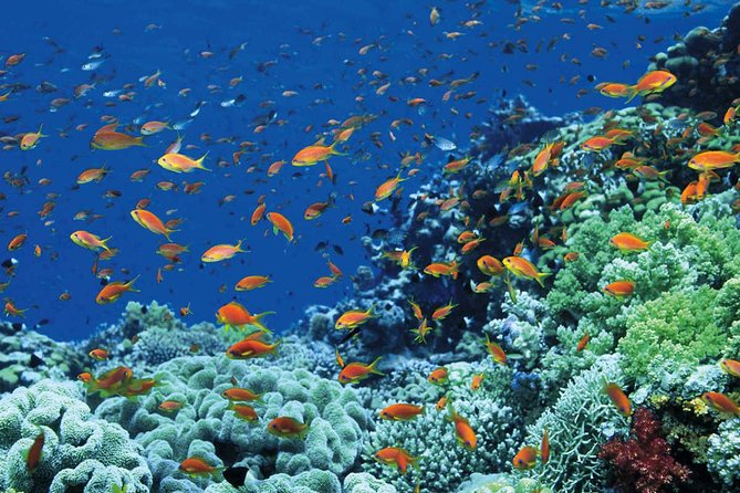 Tiran Island Full Day Sea Cruise with Snorkeling and Diving with Lunch and More