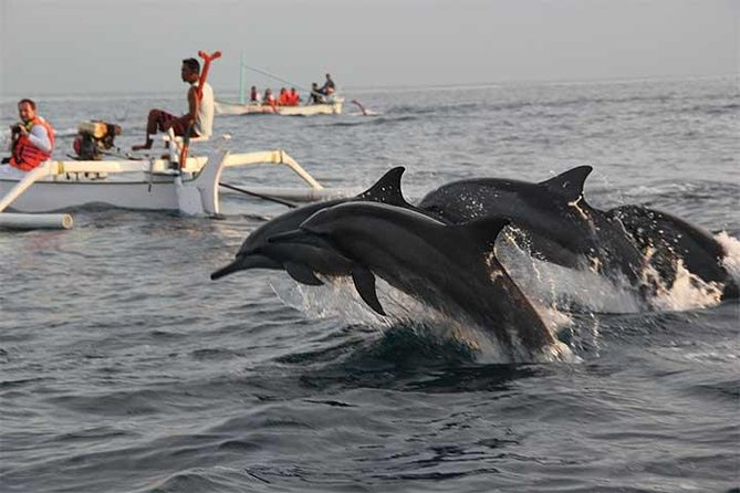 Lovina Dolphin and Jatiluwih Tour