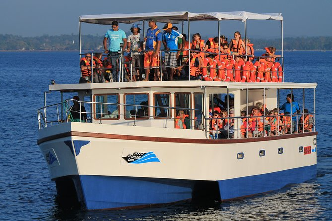 Whale Watching Cruise from Galle