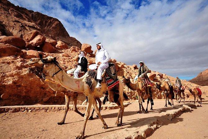 3 Days 2 Nights Camel Safari from Dahab