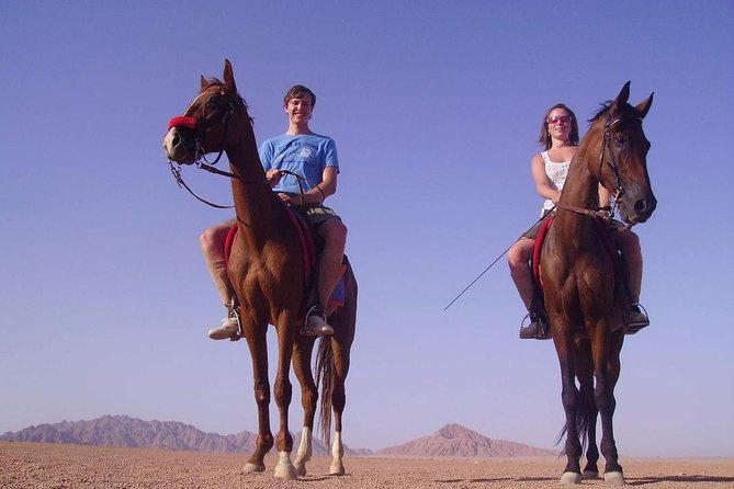 Horse Riding in Dahab