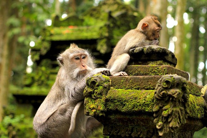 Halfday Tour: Ubud Monkey Forest and White Herons Colony Watching