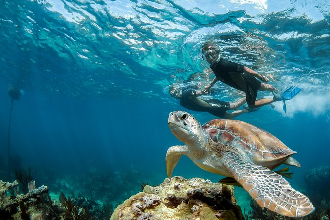 Private Tour Turtle Experience and Cenote Swim
