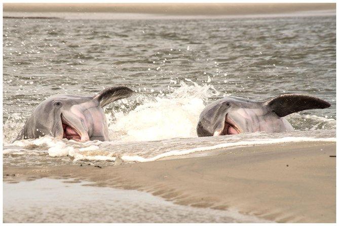 2 uur dolfijnen boottocht