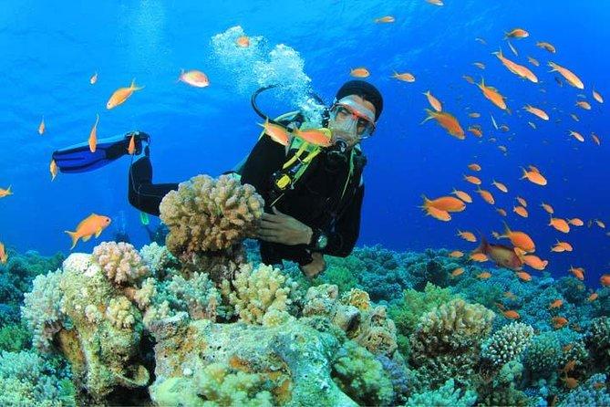 Experiencia de submarinismo para principiantes en Gran Canaria