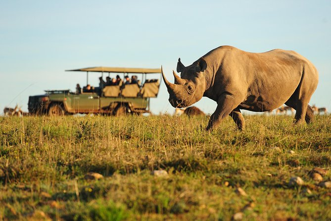 5-Day Garden Route with Shark Cage Diving, Safari, Helicopter (4-star Hotel)