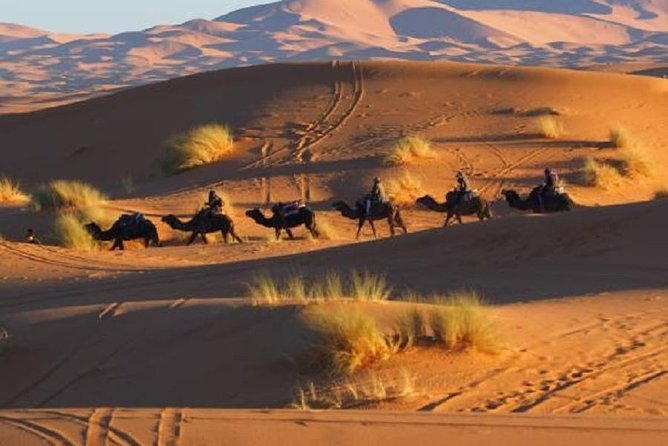 Day and Night by Camels in Erg chebbi Dunes