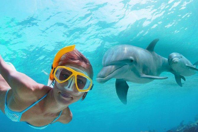 Shell Island Panama City Dolphin