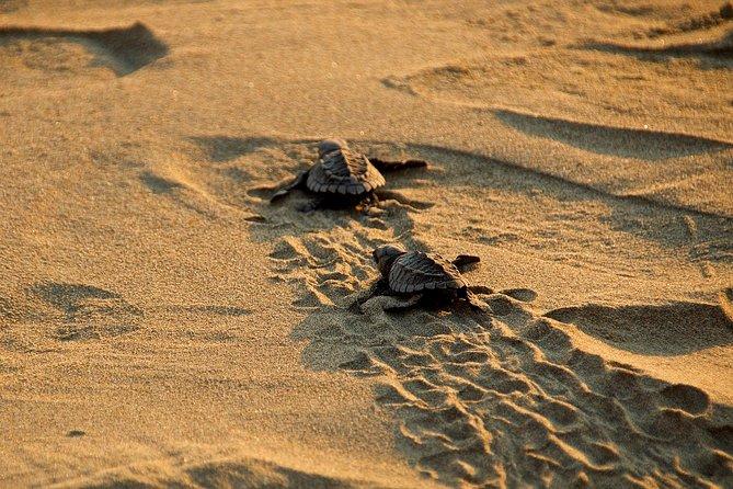 Ixtapa Baby Zeeschildpad Release