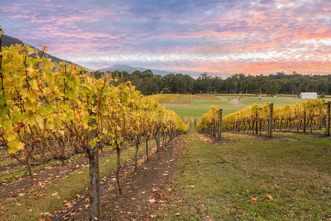 Yarra Valley Boutique Winery Tour from Melbourne
